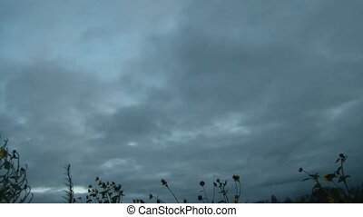 Time-lapse of Silver Clouds and Sunflowers - Low and thick...