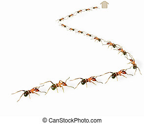 """Ants queue - A group of ants arranged in """"s"""" shape."""
