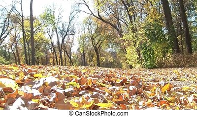 Fast Tires Through Leaves in Fall - Tires through leaves in...