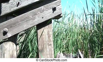 Under Railroad Bridge with Cattails - Clip under railroad...