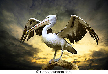 Pelican  - The pelican on a tree trunk with a storm brewing