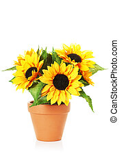 Bright sunflowers in a pot - Image of bright sunflowers in a...