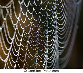 Spider net with water drops. Autumn morning in a garden.