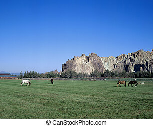 Couple of horses eating near Smith Rocks, Oregon - Couple of...