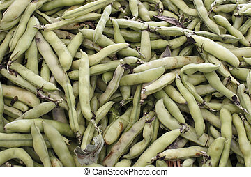 Fava Beans - Large amount of green fava bean pods for sale...