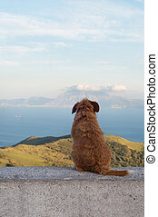 Lonely dog watching on Gibraltar strait