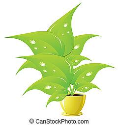 Green flower in a yellow flower pot