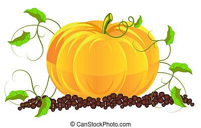 Pumpkins grow in a garden