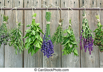 herbs - herb bundles hanging to dry on a iron rod