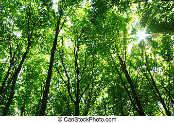 forest  - green forest  background in sunny day