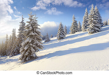Sunny landscape in the mountains. Winter morning.