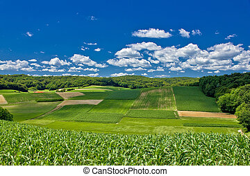 Beautiful green agricultural landscape in Croatia, corn and...
