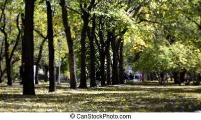 Time-lapse autumnal park