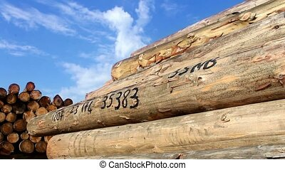 timber logs in the forest