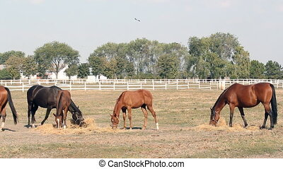 farm scene horses eating hay