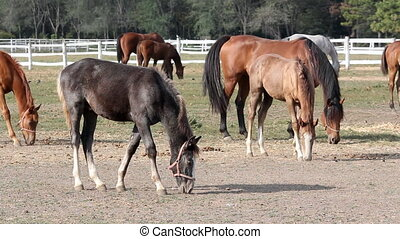 grey foal and horses