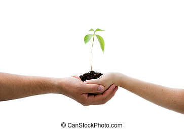 Plant in hands - A young new plant growing from palm in two...