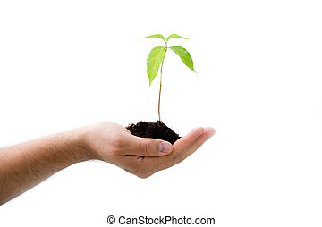Plant in male hand - A young new plant growing from palm in...
