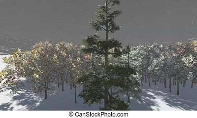 Christmas, magical forest