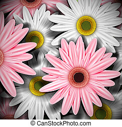 Background with gerberas Eps 10
