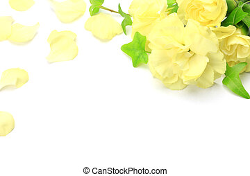 carnation - I took  yellow carnations in a white background.