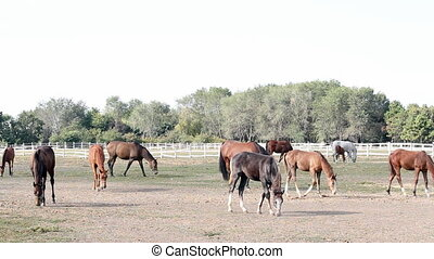 horses in corral ranch scene
