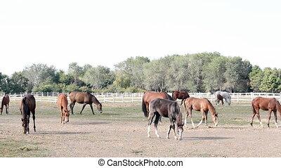 horses in corral ranch scene
