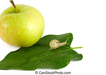 Snail and apple - The snail crawl on green a leaf near an...