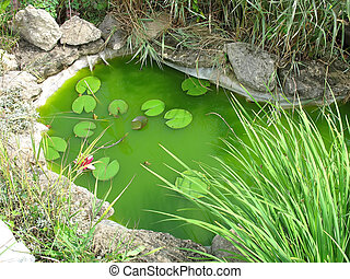 Little decorative garden pond as landscaping design element