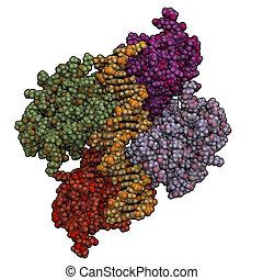 p53 tumor suppressor protein, chemical structure core domain...