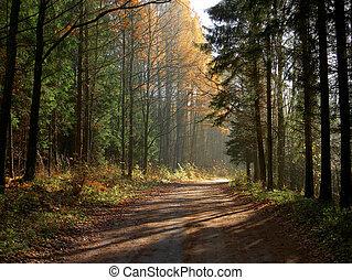 秋, 森林, 道