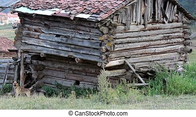 Anatolian old shack villager house in the forest