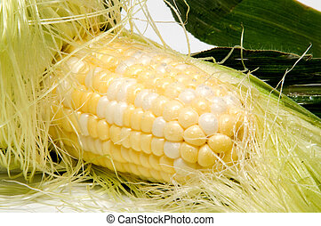Corn on the Cob - A delicious ear of corn on the cob