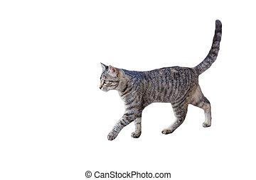 tabby kitten walking - side view of tabby kitten walking,...