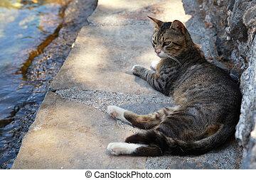 Greek street cat on the sea pier (Crete, Greece) - Greek...