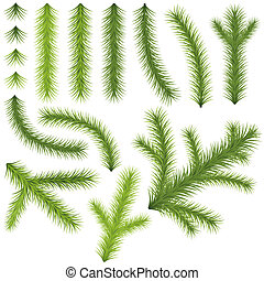 Coniferous Branches Set - Illustrations, Vector