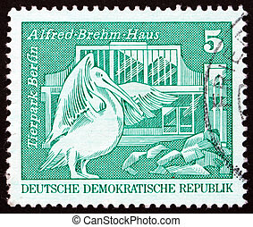 Postage stamp GDR 1973 Pelican, Berlin Zoo - GDR - CIRCA...