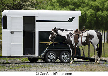 Rodeo horses outside horse trailer.