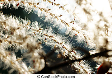 Fibrous in the back light - The macro photograph of the...