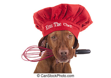 kiss the chef - pure breed vizsla dog with red Christmas...