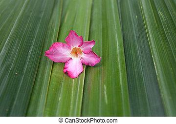 Pink flower on green leaf