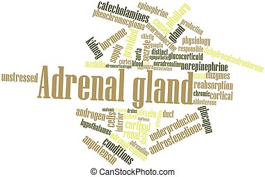 Adrenal gland - Abstract word cloud for Adrenal gland with...