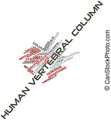 Word cloud for Human vertebral column - Abstract word cloud...