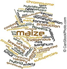 Maize - Abstract word cloud for Maize with related tags and...