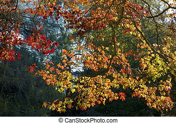 Colorful autumn fall tree leaves.