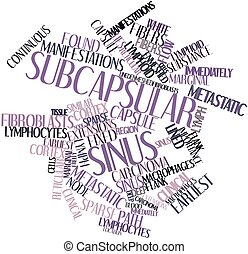 Subcapsular sinus - Abstract word cloud for Subcapsular...