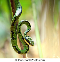 Snake - snake in green grass
