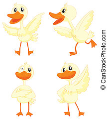 ducks - illustration of ducks on a white background