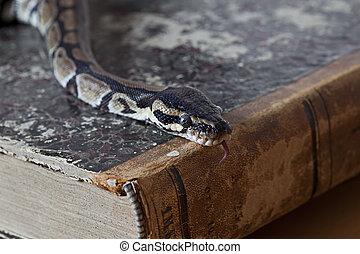 python, vindima, livro, cobra