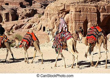 Bedouin Caravan - a Bedouin Caravan in Petra, Jordan